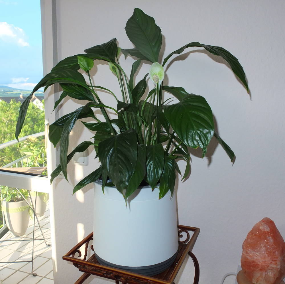 airy-pot