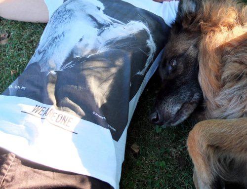 BETTER ON ME – Eco Fashion & Tierschutz