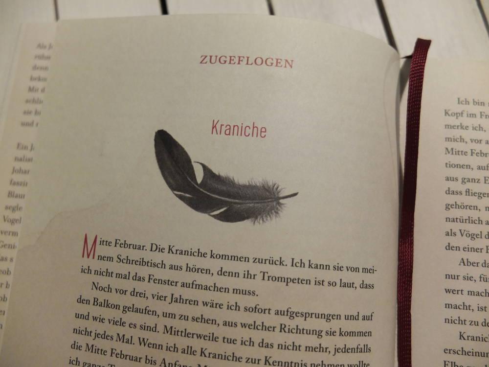 Federnlesen von Johanna Romberg