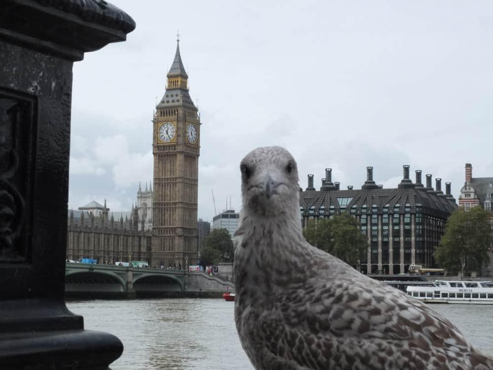 London Taube Big Ben