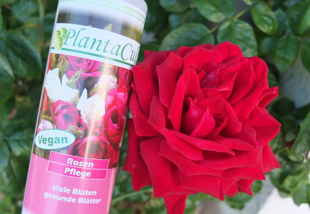 plantacult-rosenpflege