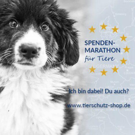 Spendenmarathon für Tiere