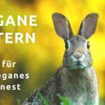 Vegane Ostern – Tipps für ein veganes Osternest & Give Away